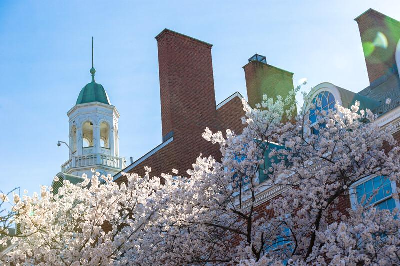 View of the Microbiology Building steeple with spring blossoms in the foreground against a blue sky.
